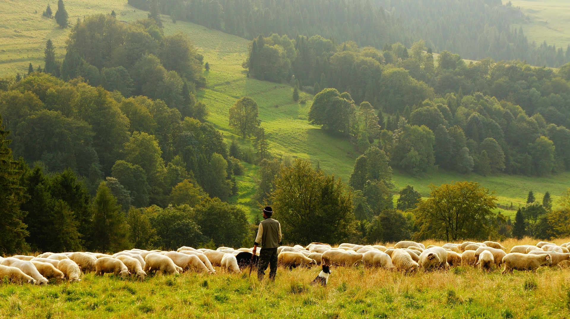 Transformation Examples In The Bible Shepherd